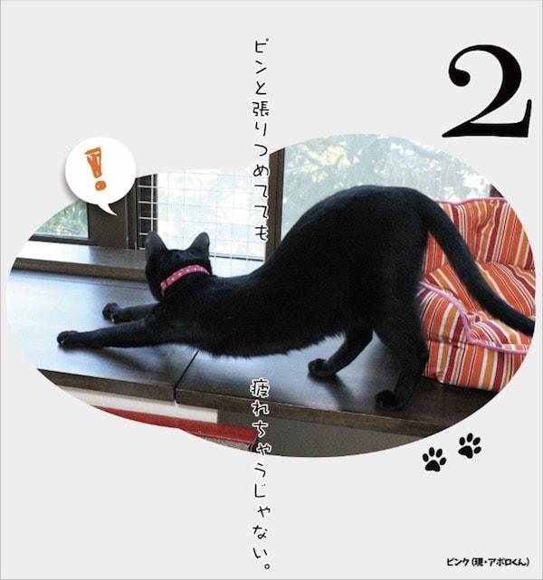 日めくりカレンダー「まいにち黒猫」に登場する黒猫1