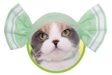 キャンディをイメージした猫用のかぶりもの、ミント