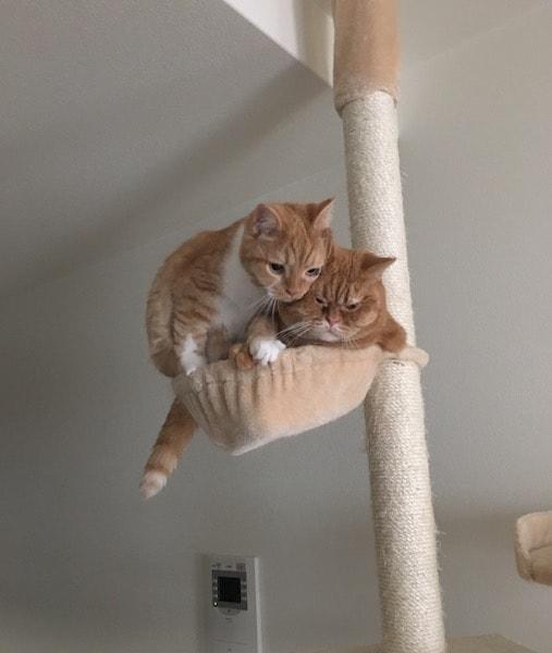 シンクロする2匹の猫  by パパンニャンニャン