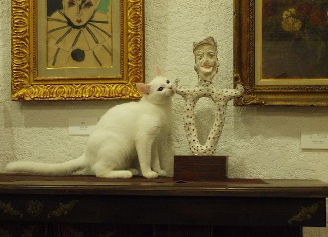 美術館内でくつろぐ猫 by 松山庭園美術館