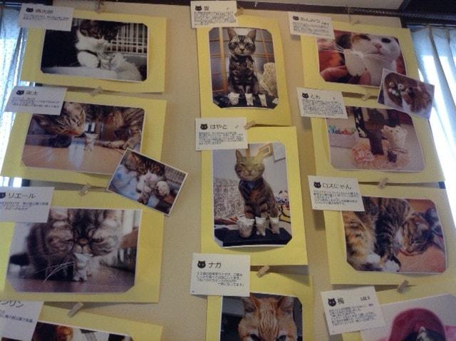 ねこひげスタンド写真展の展示写真2