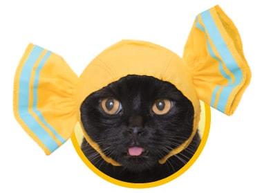 キャンディをイメージした猫用のかぶりもの、ハニーレモン