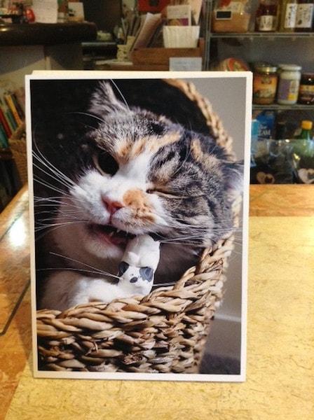 ねこひげスタンドと猫のツーショット写真