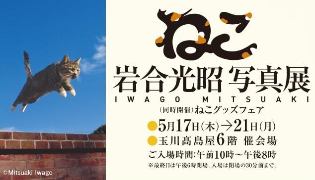 岩合光昭 写真展「ねこ」東京・世田谷区の玉川高島屋で5/17から開催