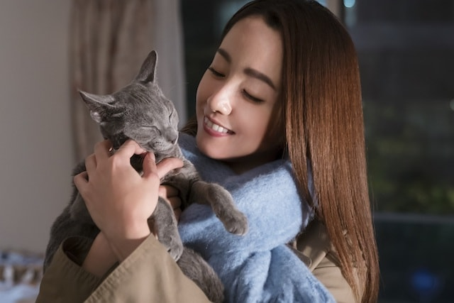 沢尻エリカと共演して飼い猫になったロシアンブルー