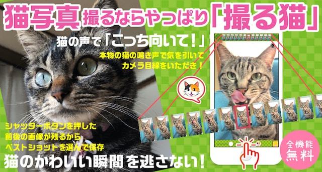 猫写真専用カメラアプリ「撮る猫」の新バージョン3.1