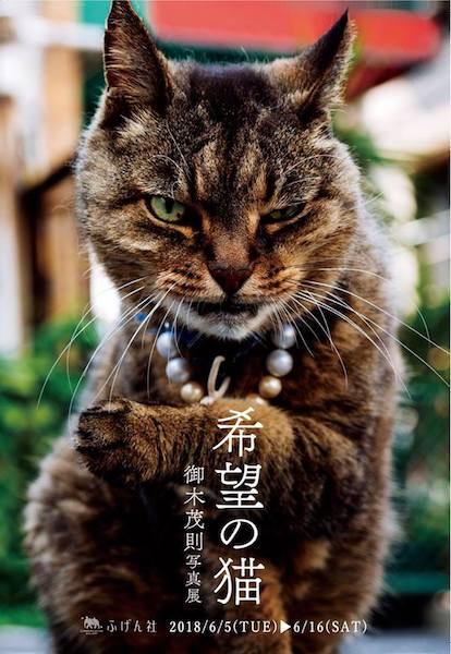 御木 茂則 写真展「希望の猫」パンフレットイメージ