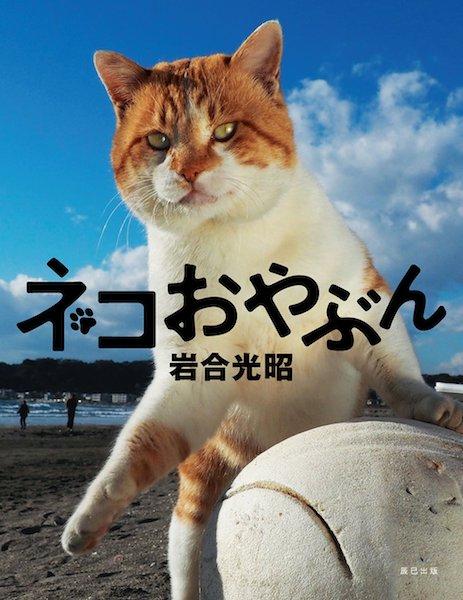 岩合光昭 写真集 「ネコおやぶん