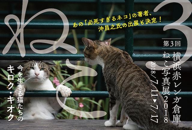 史上最大規模!500点以上の猫写真を展示する「横浜赤レンガ倉庫 ねこ写真展2018」