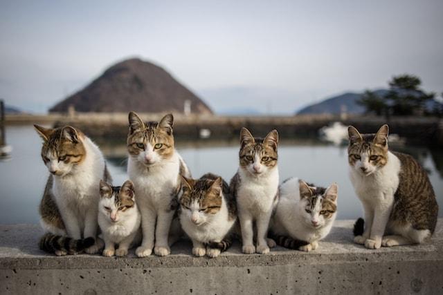 キジ白猫がずらっと並んだ写真 by はにぶちひろあき