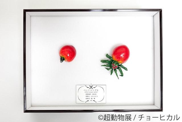 チョーヒカルの空想動物作品、ベニトマトグモ