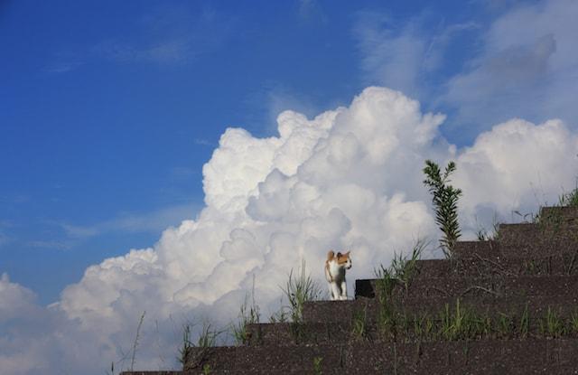 入道雲と猫の写真 by 星野俊光
