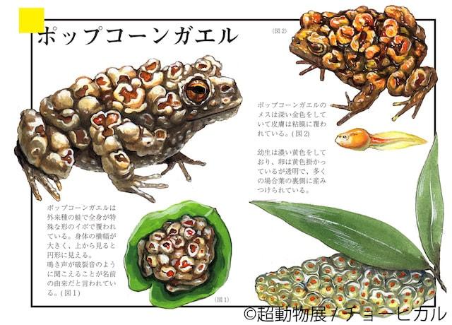 チョーヒカルの空想動物作品、ポップコーンガエル