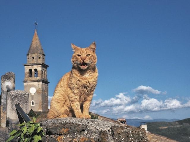 絶景が似合うおやぶん猫