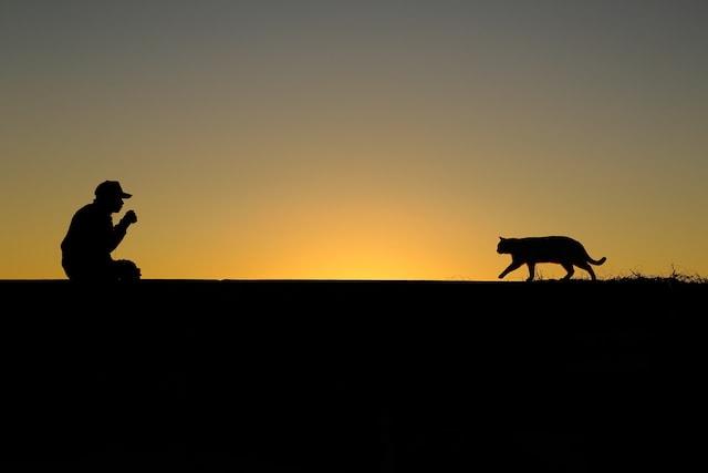 夜明けの猫のシルエット写真 by 市川 淳一