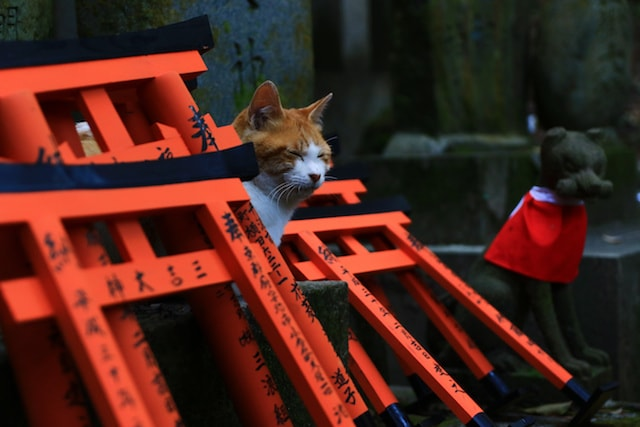 赤い鳥居と猫の写真 by 池野武志