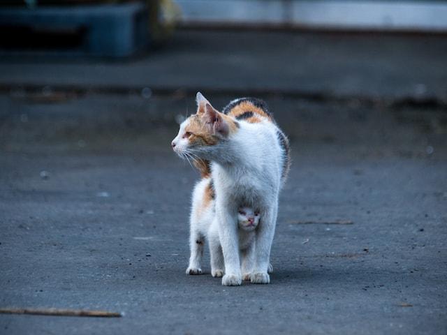 三毛猫の親子猫の写真 by ねこしめ