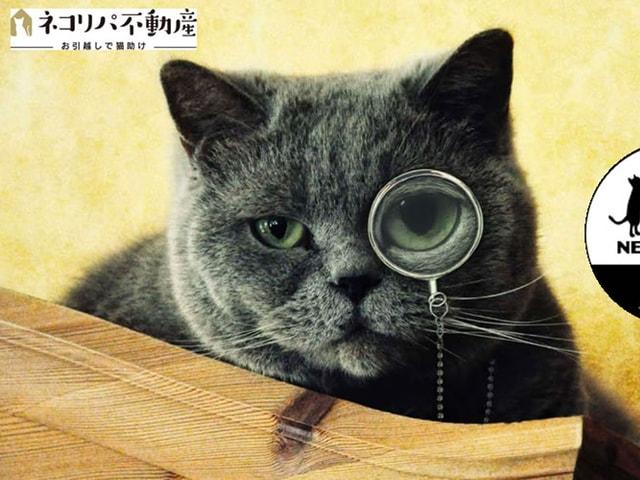 手数料の一部が保護猫活動に役立てられる猫専門の不動産仲介サイト