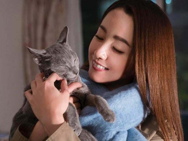 沢尻エリカ主演のネコ映画「猫は抱くもの」本編の予告映像が公開