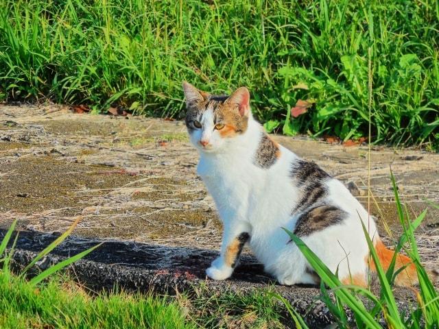 猫はウンチのニオイを性別や個体の識別に活用していた〜岩手大学が発表