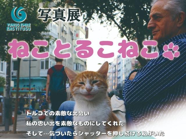 トルコに暮らす猫たちの姿をカメラに収めた写真展「ねことるこねこ」