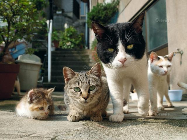 岩合光昭 写真展「ねこ」で展示される「島根県・出雲市」の猫写真
