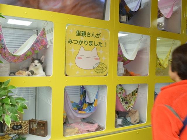 人がいる場所に猫がやってくる、移動式の譲渡会場車「幸せの黄色い車」