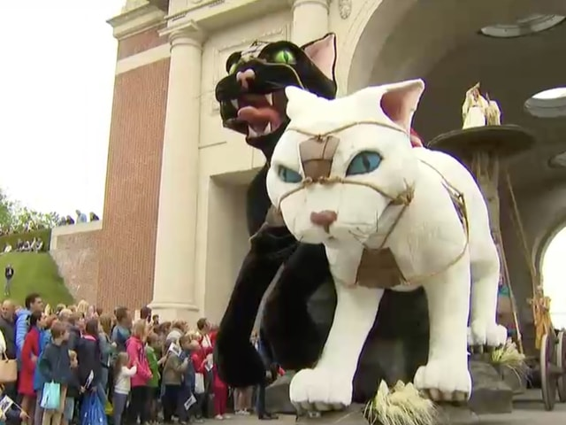 ベルギーで3年に1度の猫祭りが5/13に開催。5,000人の日本人が観賞