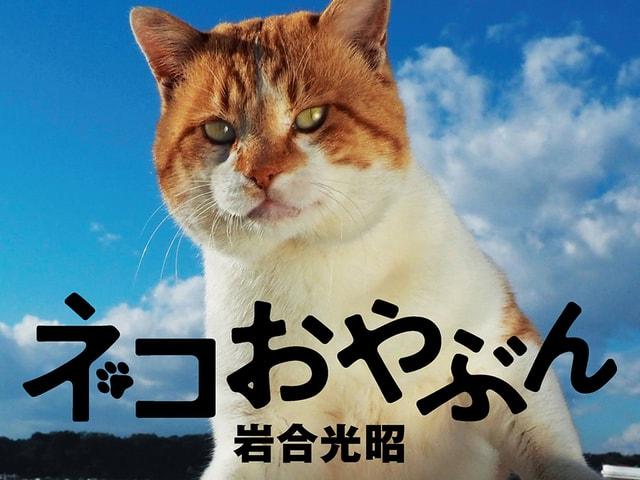 親分ネコばかりを集めた岩合光昭さんの新作写真集「ネコおやぶん」