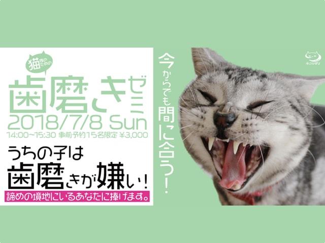 愛猫の歯、磨けてる!?猫のための歯磨き講座が7月8日に都内で開催