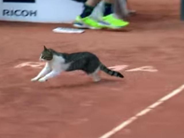 猫が試合中のテニスコートを駆け抜ける事案が発生!BNLイタリア国際 2018