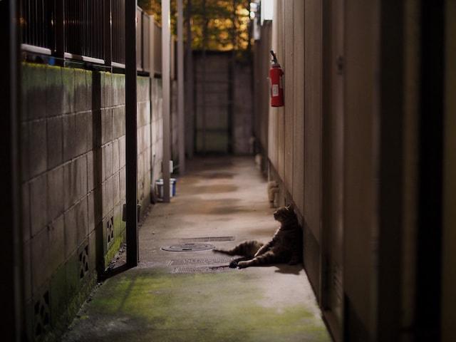 アパートの通路で佇む猫の写真 by 柳沢諏訪郎