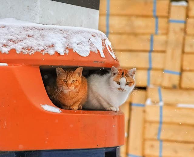 郵便ポストで雪を凌ぐ猫の写真 by 吉田裕吏洋