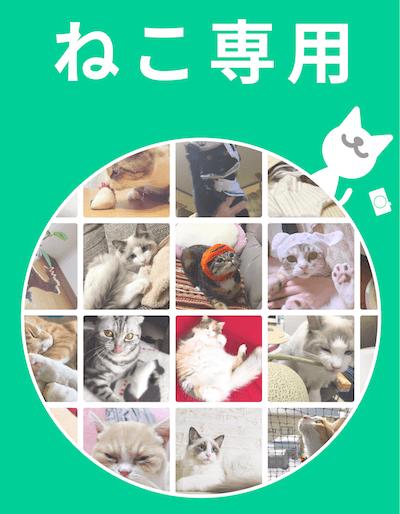 猫好きさん専用のSNSアプリ「ねこすた」