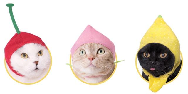 猫に「ねこフルーツちゃん2」をかぶってもらったイメージ