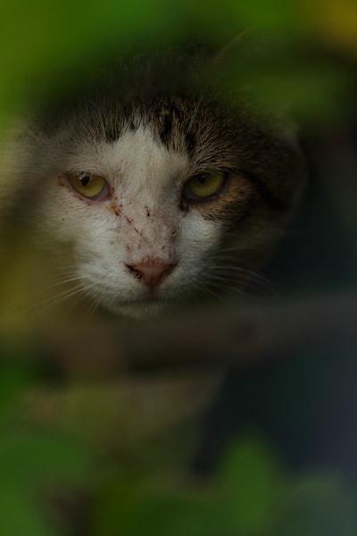 恨めしそうな表情の猫 by 石井尚顕