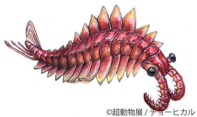 チョーヒカルの絶滅動物作品、アノマロカリス