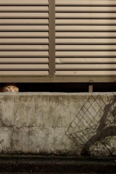 隙間から除く猫の写真 by サトウミキ