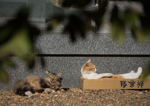 ダンボールでくつろぐ猫の写真 by 沖昌之