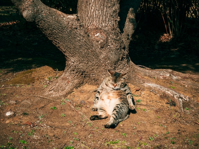 木の根元でヘソ天で眠る猫の写真 by 御木 茂則