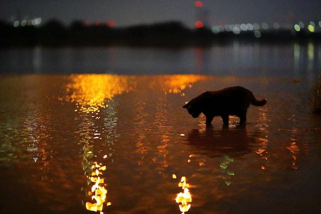 水辺の猫の写真 by 伊藤 匠