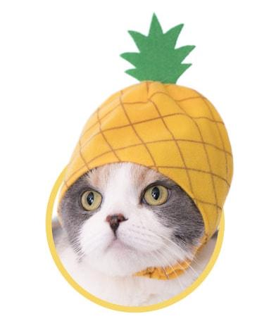 パイナップルをモチーフにした猫用のかぶりもの