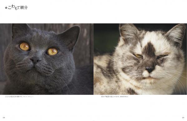 こわもて親分のネコ写真 by 岩合光昭
