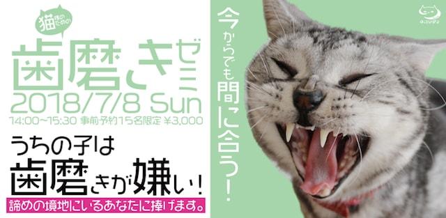 猫向けのデンタルケア講座「今からでも間に合う!猫様のための歯磨きゼミ」