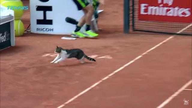 イタリアン・オープン(BNLイタリア国際)で試合中のコートを走る猫