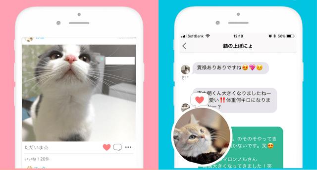 猫好き専用のSNSアプリ「ねこすた」の画面イメージ
