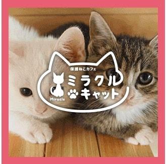 中川桂子さん(=しょこたんママ)プロデュースの保護猫カフェ「ミラクルキャット」