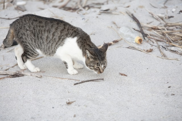 ニオイを嗅ぐ猫のイメージ写真