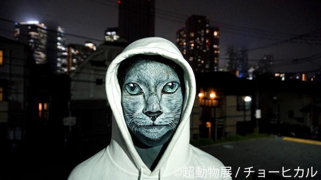 チョーヒカルのボディペイント作品、野良猫
