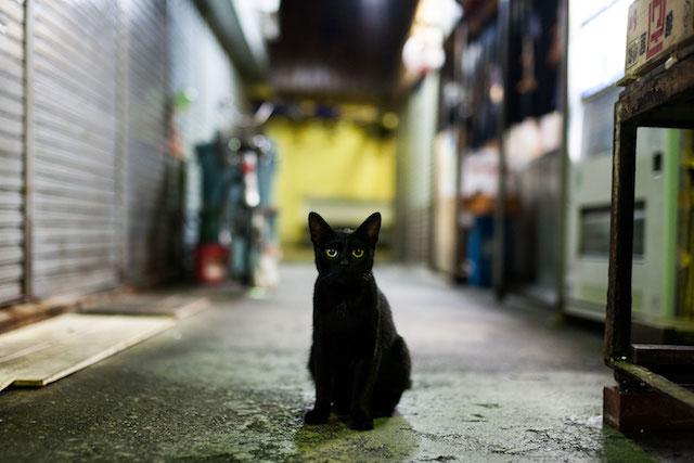 黒猫の写真 by 阪靖之